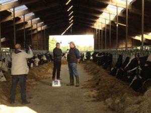 De Roemeense TV groeit, evenals de melkveehouderij in de toekomst